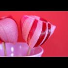 Rose Innocence - Ártatlan rózsa bio rúzs